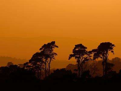 Winter sunset over the Ashdown Forest at Ashdown Forest