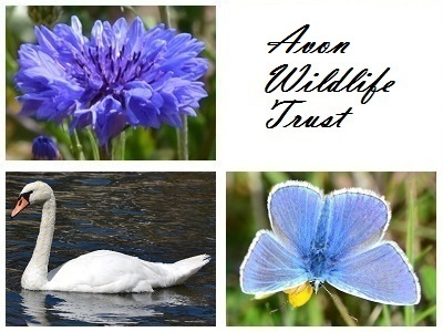 Avon Wildlife Trust at Ashton Court Meadow