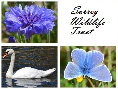 Surrey Wildlife Trust at Burners Heath and Swallows Pond